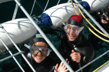 shark-divers-in-cage