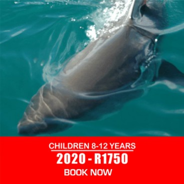 Children-shark-diving-prices-2020