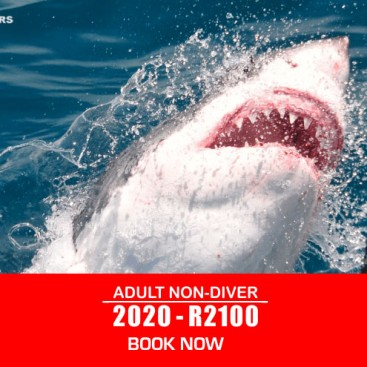 adult-non-shark-diver-prices-2020