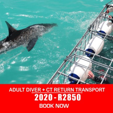 adult-shark-diving-+-transport-prices-2020