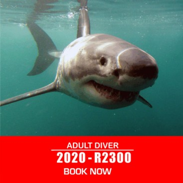 adult-shark-diving-prices-2020