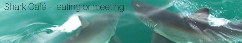 White Shark Cafe eating or meeting blog banner