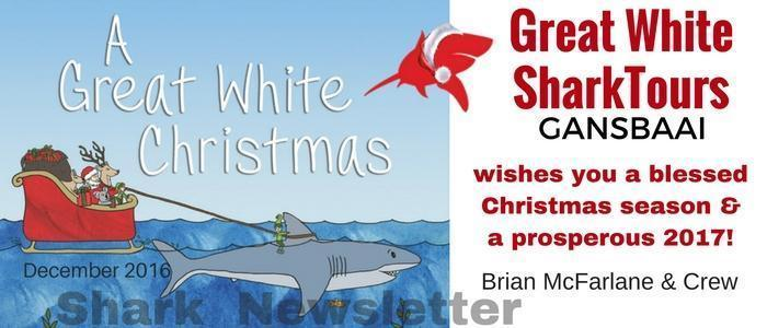 Shark newsletter December