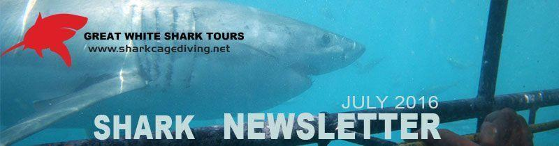 shark newsletter header