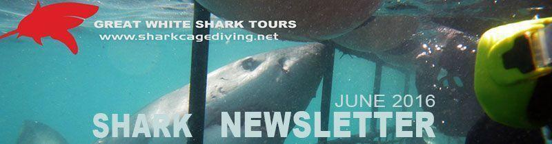 shark newsletter headerjuly