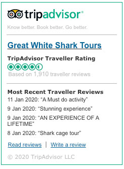 Reviews tripadvisor Shark Cage Diving with Great White Shark Tours