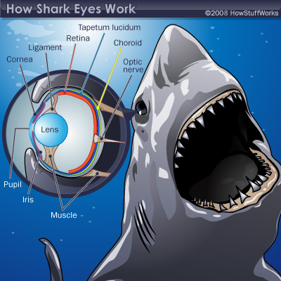 shark eyes how it works