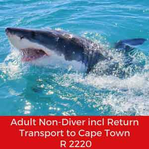 adult non diver w trp