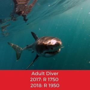 shark booking adult