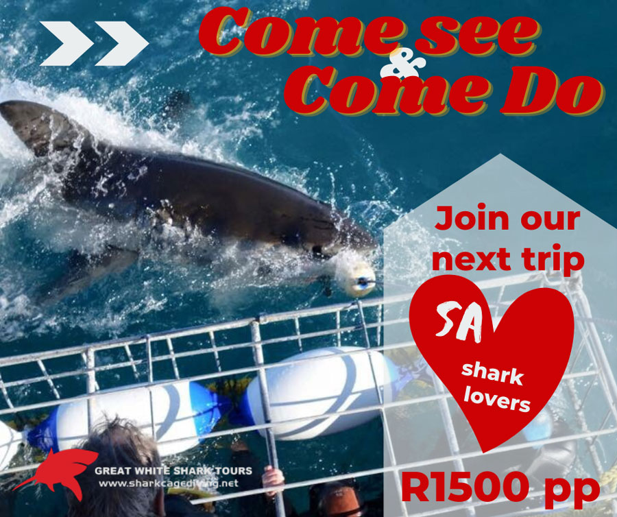 shark cage diving sa special