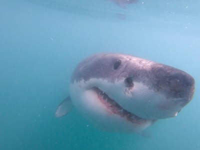 Daily Shark Cage Diving Blog 10 March 2020