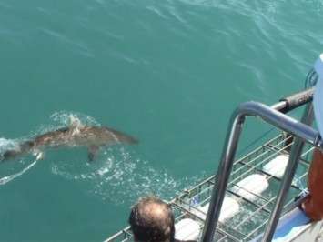 Daily Shark Cage Diving Blog 11 February 2020