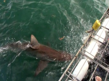 Daily Shark Cage Diving Blog 18 February 2020