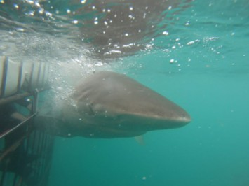 Daily Shark Cage Diving Blog 2 March 2020