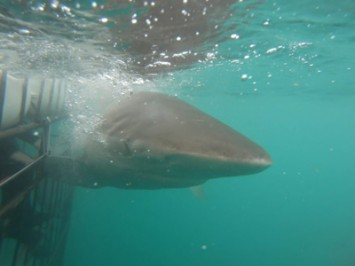 Daily Shark Cage Diving Blog 22 January 2020