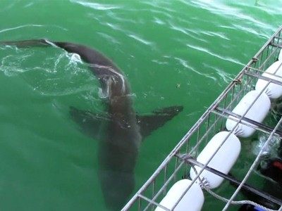 Daily Shark Cage Diving Blog 24 February 2020