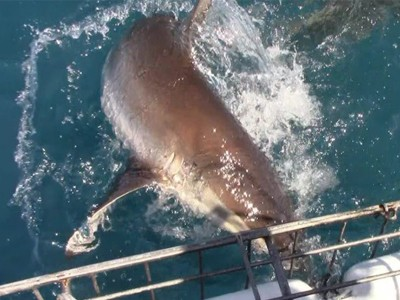 Daily Shark Cage Diving Blog 23 January 2020