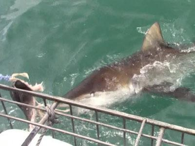 Daily Shark Cage Diving Blog 29 December 2019