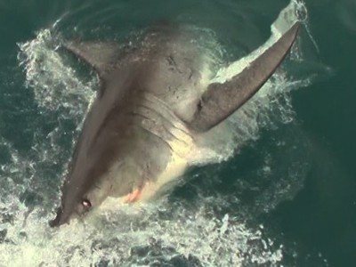 Daily Shark Cage Diving Blog 7 March 2020