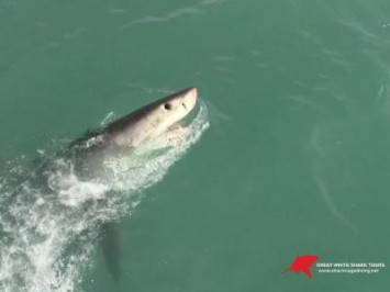 Daily Shark Cage Diving Blog - 24 October 2019