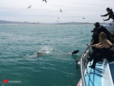 Daily Shark Cage Diving Blog - 11 October 2019