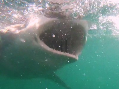 Daily Shark Cage Diving Blog 10 January 2020