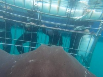 Daily Shark Cage Diving Blog 2 January 2020