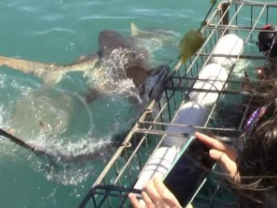 Daily Shark Cage Diving Blog 5 December 2019