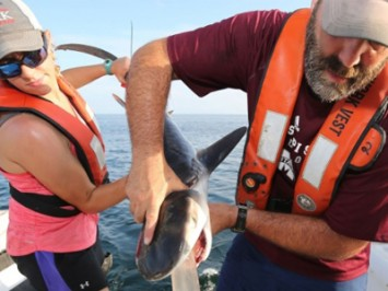 Sharks puke their guts out… literally!