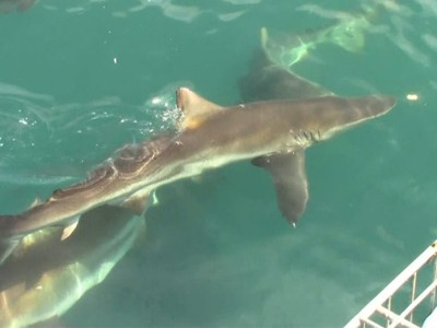 Daily Shark Cage Diving Blog 14 January 2020