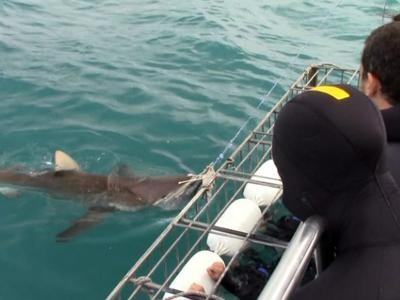 Daily Shark Cage Diving Blog 10 December 2019