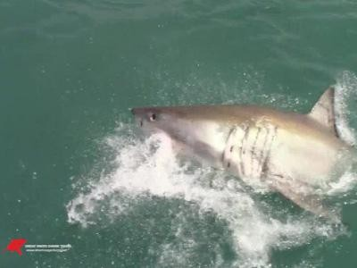 Daily Shark Cage Diving Blog - 22 October 2019