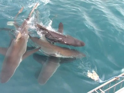 Shark Cage Diving Blog 4 February 2020